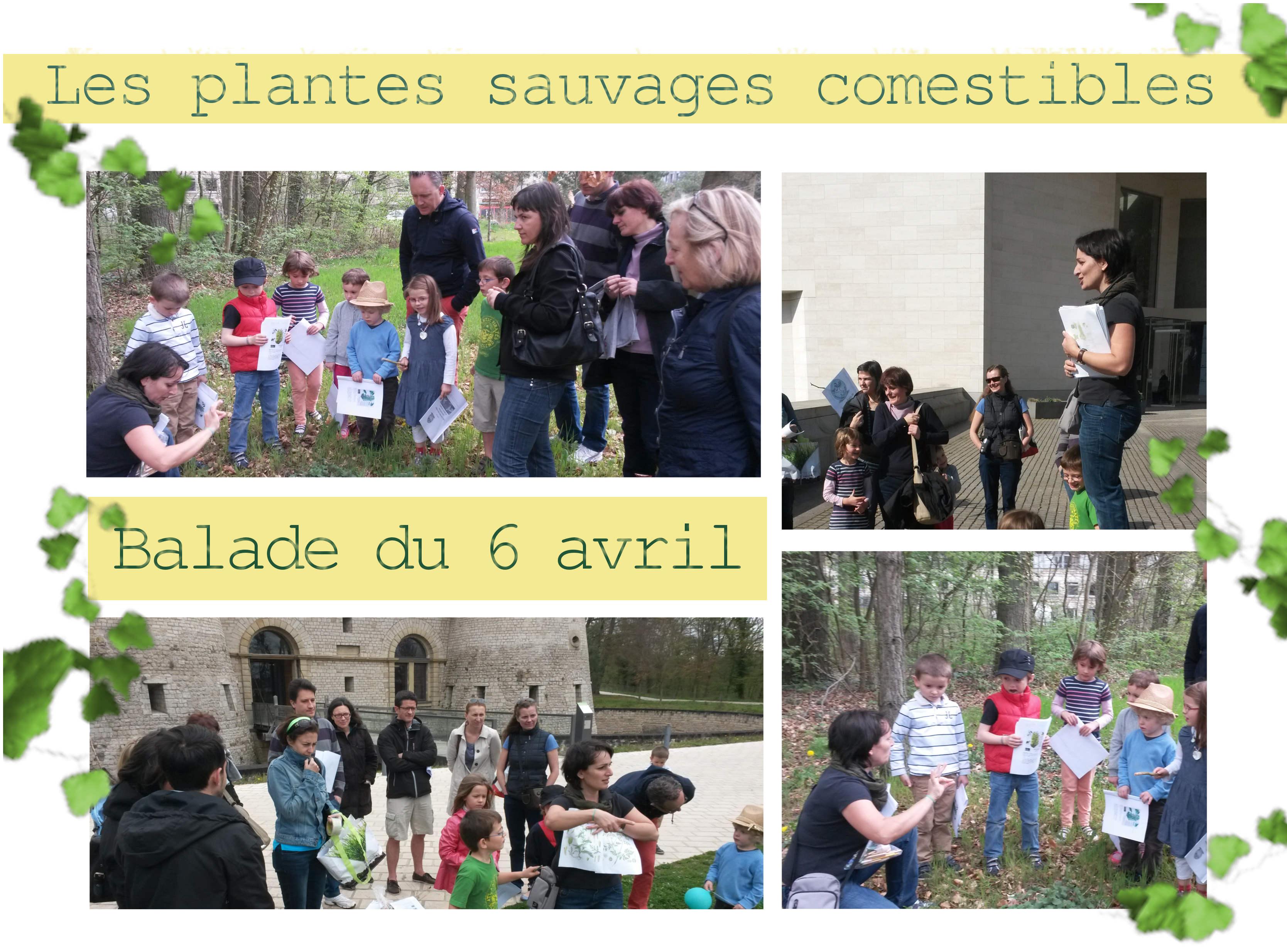 plantes sauvages